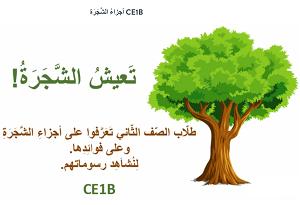 Protégeons les arbres