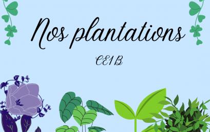 Plantation CE1B!